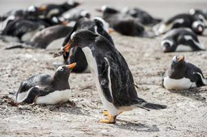 pingüinos en la antártida foto