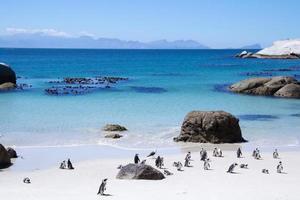 Penguins walking on sand near a blue ocean
