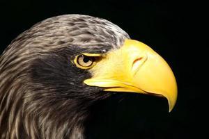 Eagle. photo