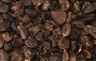 Whole Cola Nuts (background image)