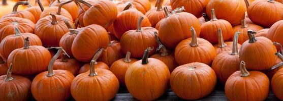 Piles of pumpkins background photo