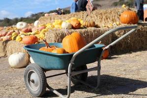 Pumpkins on a wheel cart photo