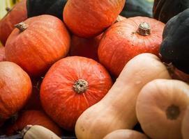 Fall Squash photo