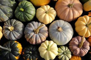 Squash and pumpkins. photo