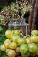 vine ripe grapes photo