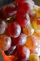 uvas rojas foto