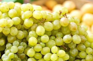 Green grapes on vine