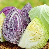 Organic Cabbage. photo