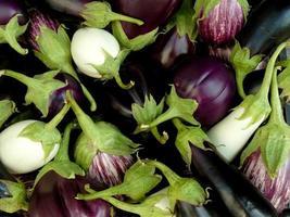 home grown eggplants photo
