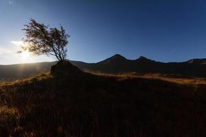 Árbol aislado en una roca en las tierras altas (Escocia) foto