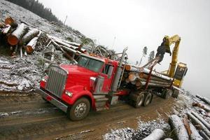 Winter logging photo