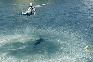 navy sea king helicopter photo