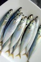 Fresh Mackerel scad photo
