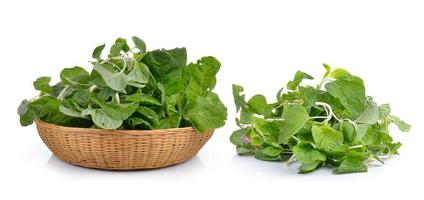 spinach on white background photo