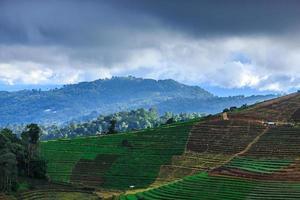 campo vegetal das montanhas