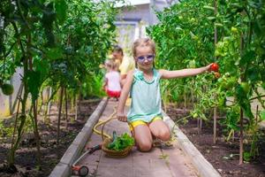 Little girl collecting crop cucumbers and tomatos in greenhouse