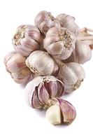 Garlic (Allium) photo