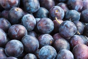 Fresh plums closeup background photo