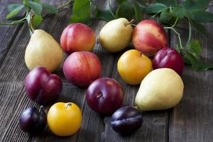 Colorful summer fruits photo