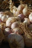 Garlic bulbs at market photo