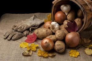 Harvested veggies in a basket.