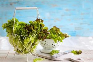 Various types of lettuce photo