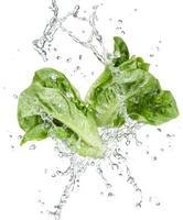 freshness of vegetables photo