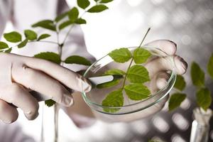 experimento científico con laboratorio de plantas