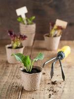 plantaardige zaailingen