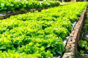 Organic hydroponic farm photo