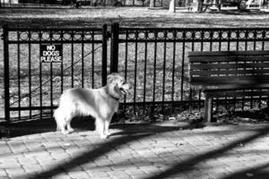 "Dog and ""No Dogs Please"" sign in Federal Hill Park"