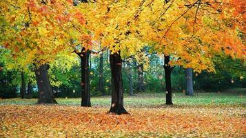 follaje de otoño foto