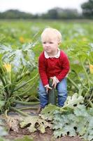 Funny little girl playing in zucchini field photo