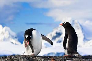 pingüinos en una roca foto