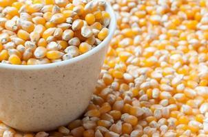 vrac de grains de maïs