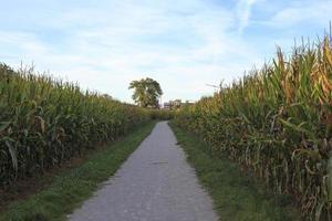 campo de maiz