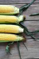 corn cob in green leaves photo