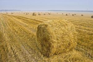 Hay bale landscape photo