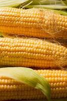 Primer plano de maíz. foto