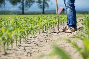 arado campo de maíz foto