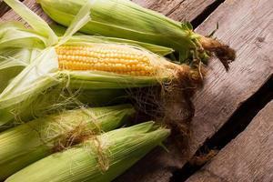 Organic agriculture corn.