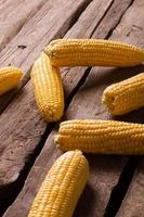 Cobs of corn scattered.