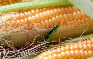Grains of ripe corn