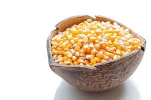 corn in burlap bag on white background