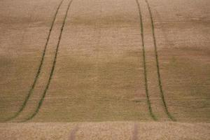 wheat field tracks