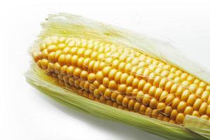 Corn on cob photo