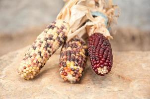 indian corn photo