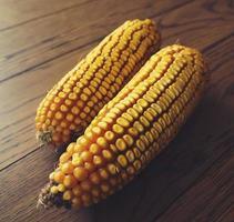 Corn photo