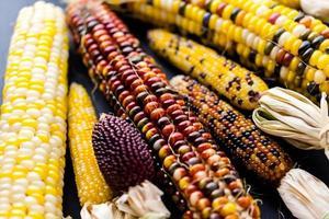 Flint corn photo