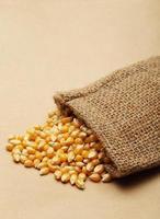 el grano de maíz en saco pequeño foto